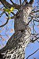PikiWiki Israel 35402 Parakeet on treetop.JPG