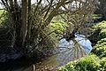 Pincey Brook south from Chelmsford Road, Hatfield Heath, Essex 02.jpg
