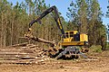 Pine tree thinning in Nacogdoches County, Texas. (24481706294).jpg