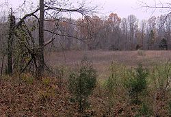 Pinson-mounds-mound29.jpg