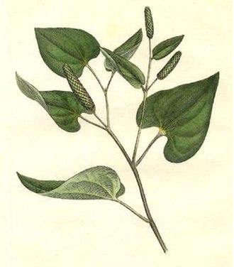 Long pepper - Long pepper's leaves and fruits