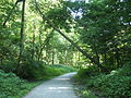 Pittsburgh frick park trail.jpg