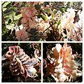 Plantas exóticas.jpg