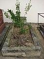 Plants on grave of Puteaux.jpg