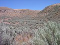 Pockets of sagebrush in drainages understory dominated by non-native annuals in SW Idaho.jpg