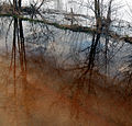 Podlasie Bug Gorge Landscape Park Bp51.jpg