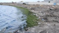 File:Pollution littoral Sayada, 9 avril 2016.webm