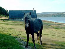 Pony on holy isle.jpg