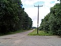 Power cables in Bawtry forest. - geograph.org.uk - 508841.jpg