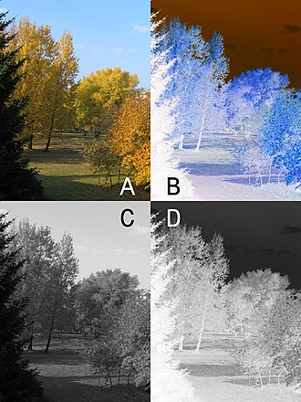 Negative (photography) - Color positive picture (A) and negative (B), monochrome positive picture (C) and negative (D)