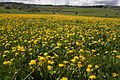 Prairie productive, Haut-Doubs - img 46871.jpg