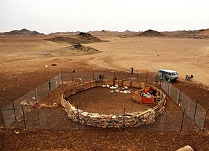 Human–wildlife conflict - A traditional livestock corral surrounded by a predator-proof corral in South Gobi desert, Mongolia, to protect livestock from predators like snow leopard and wolf.