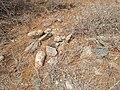 Prehistoric pandava graves 05.jpg