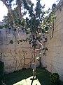 President's Kitchen Garden, ancillary of San Anton Palace 04.jpg