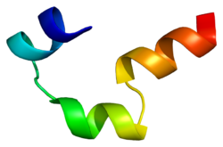 Cholecystokinin B receptor - Wikipedia, the free encyclopedia