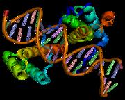 HOXD9, involved in body layout (morphogenesis)