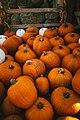 Pumpkins Irvine Regional Park (Unsplash).jpg
