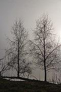 Put van Nederhorst in de mist. 28-02-2021. (d.j.b) 24.jpg