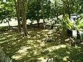 Putrajaya, the Botanical Garden 41.jpg