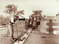 Queensland State Archives 2471 Sheep dipping at Yandilla 1898.png