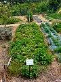 Quinta Pedagógica - Plantação de batata.JPG