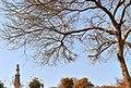 Qutub Minar with tree.jpg