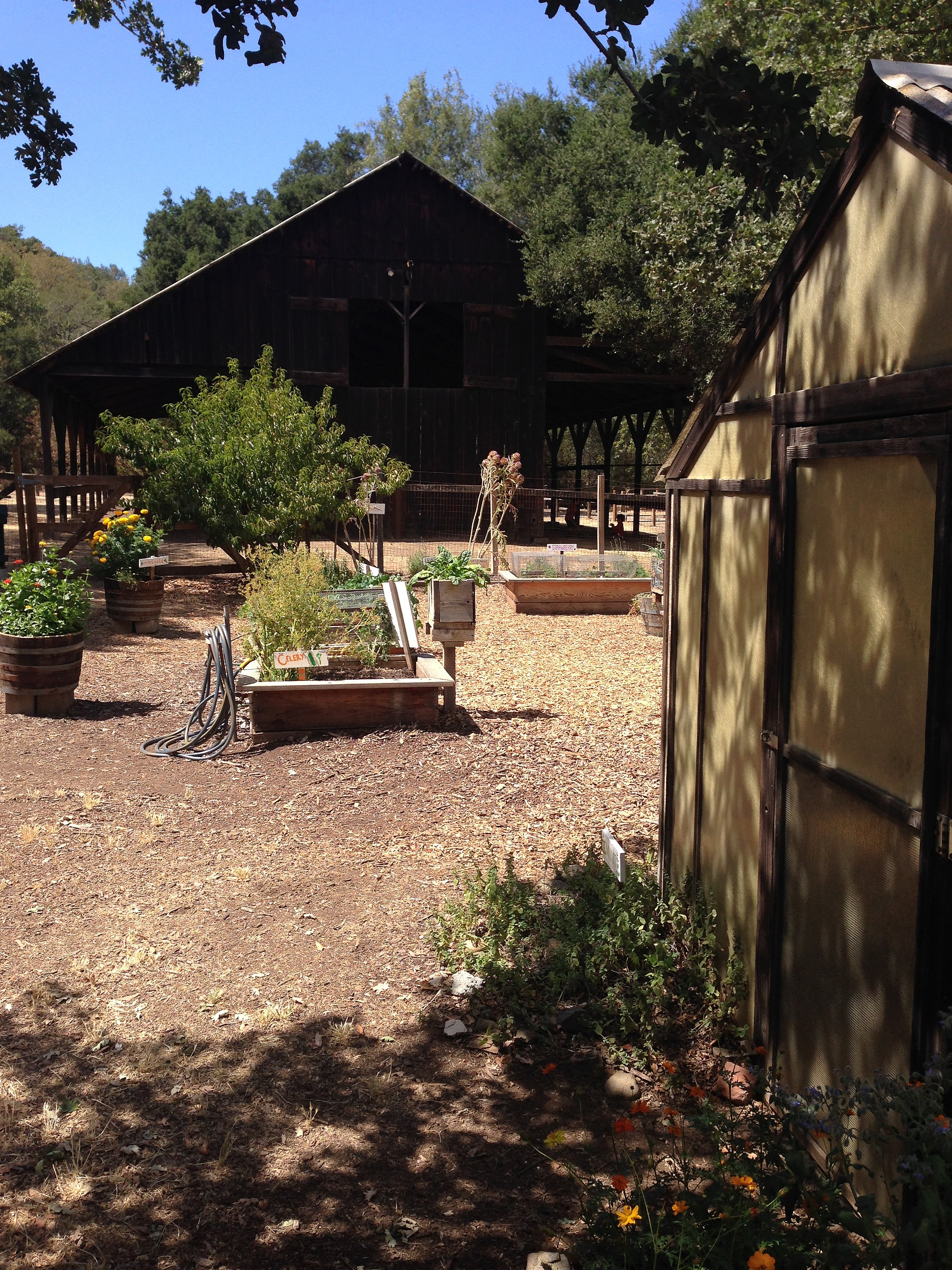 Lovely Craigslist San Antonio Farm And Garden By Owner Contemporary