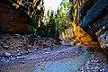 Rattlesnake Creek Trail Adventure (236802299).jpeg