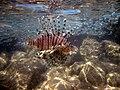 Red sea-reef 3767.jpg