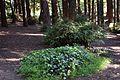 Redwood Memorial Grove 22 2017-06-12.jpg