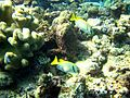 Reef2161 - Flickr - NOAA Photo Library.jpg