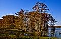 Reelfoot Lake Tennessee (30212123).jpeg