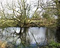 Reflections in mere - geograph.org.uk - 369754.jpg