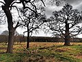 Richmond, UK - panoramio (9).jpg