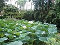 Rio de Janeiro Botanical Garden 10.JPG