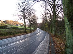 River Rivelin - A long straight stretch of Rivelin Valley Road with its lime trees lining it.