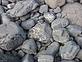 Rocks on the beach, Millook Haven - geograph.org.uk - 411288.jpg