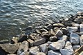 Rocky Patuxent River Shore (40292366).jpeg