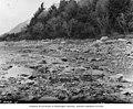 Rocky riverbed looking west from survey station 134, Alaska Midland Railway survey, Alaska, 1909 (AL+CA 3087).jpg