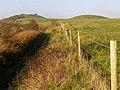 Round barrows on the Dorset Ridgeway - geograph.org.uk - 297723.jpg