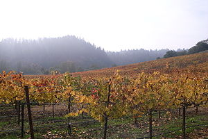 Vineyard in the California wine region of the ...