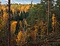 Sügisene mets Palometsa külas.jpg