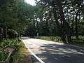 Saga Prefectural Road No.250 in Niji Pine Grove 2.jpg