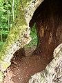 Salix hollow tree FRA-Niddapark 05.jpg
