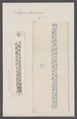 Salpa rhomboides - - Print - Iconographia Zoologica - Special Collections University of Amsterdam - UBAINV0274 092 08 0056.tif