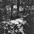 Sarcofaag in tuin van voormalige hervormde pastorie - Oudega - 20334622 - RCE.jpg