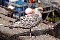 Scarborough MMB 26 Fish Market.jpg