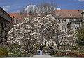 Schmuckhof, Jardín Botánico, Múnich, Alemania 2012-04-21, DD 02.JPG