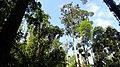 Semenggoh Wildlife Center, Kuching, Sarawak.jpg