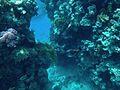 Sharm El Sheikh coral tunnel.jpg